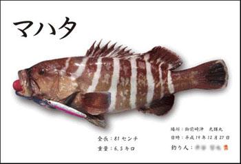 gyotaku.mahata.jpg